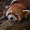 20081221D70多摩動物公園093