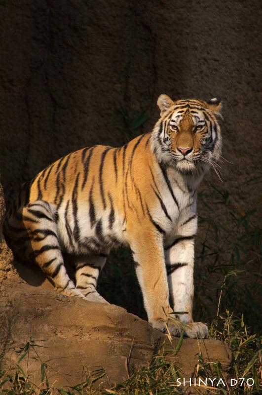 20081221D70多摩動物公園101