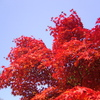 紅葉2007