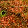 秋の小宇宙