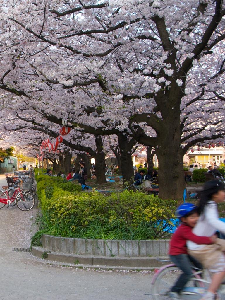 桜そっちのけ