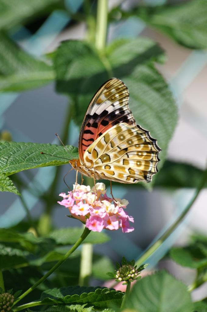 都会の蝶-1-