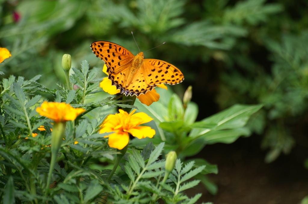 都会の蝶-2-