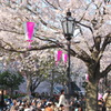 _005.4.3桜祭り