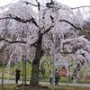 10.3.29小石川後楽園_026