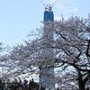 _009.4.3桜祭り_094.4.3隅田川_094