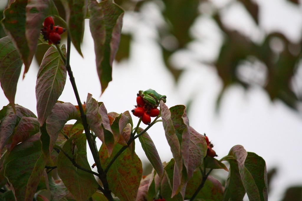 木の上のカエル