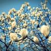 春がくるよ