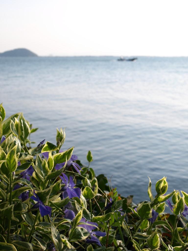琵琶湖 水が浜