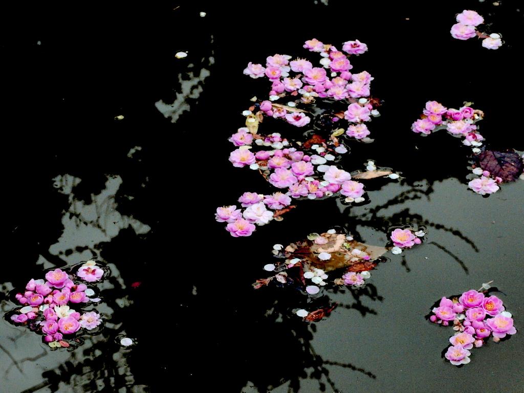 落花、早春