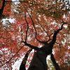 大寧寺の紅葉2