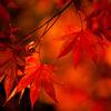 秋の光 その7