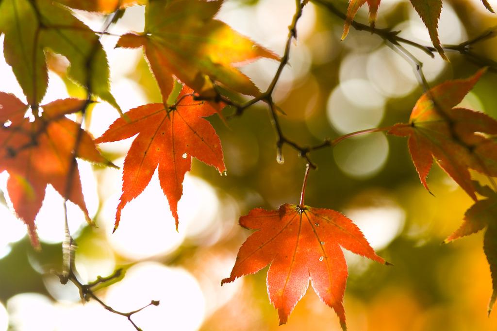 秋きらきら