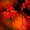 秋の光 その2
