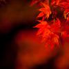 秋の光 その6