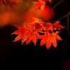 秋の光 その1
