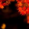 秋の光 その4