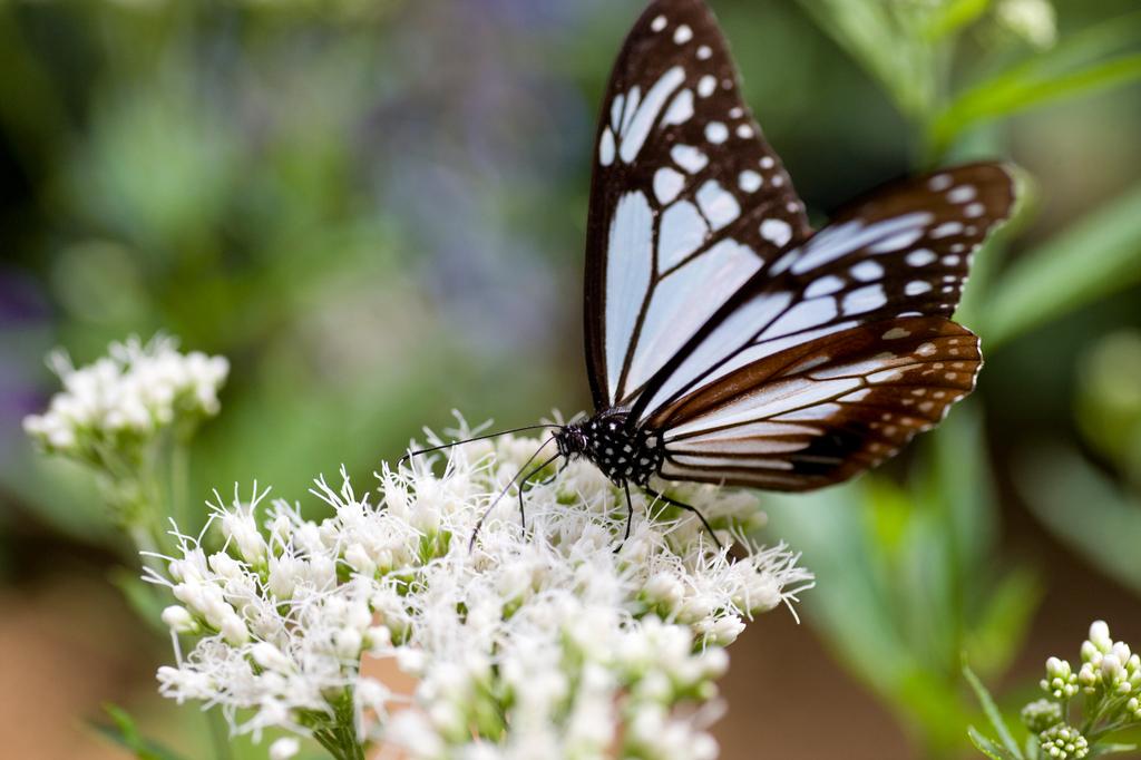 温室の中の蝶