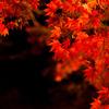 秋の光 その3