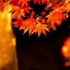 秋の光 その5
