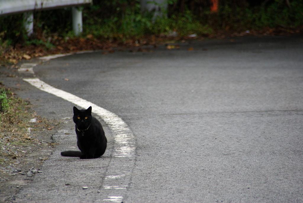 S字に猫。