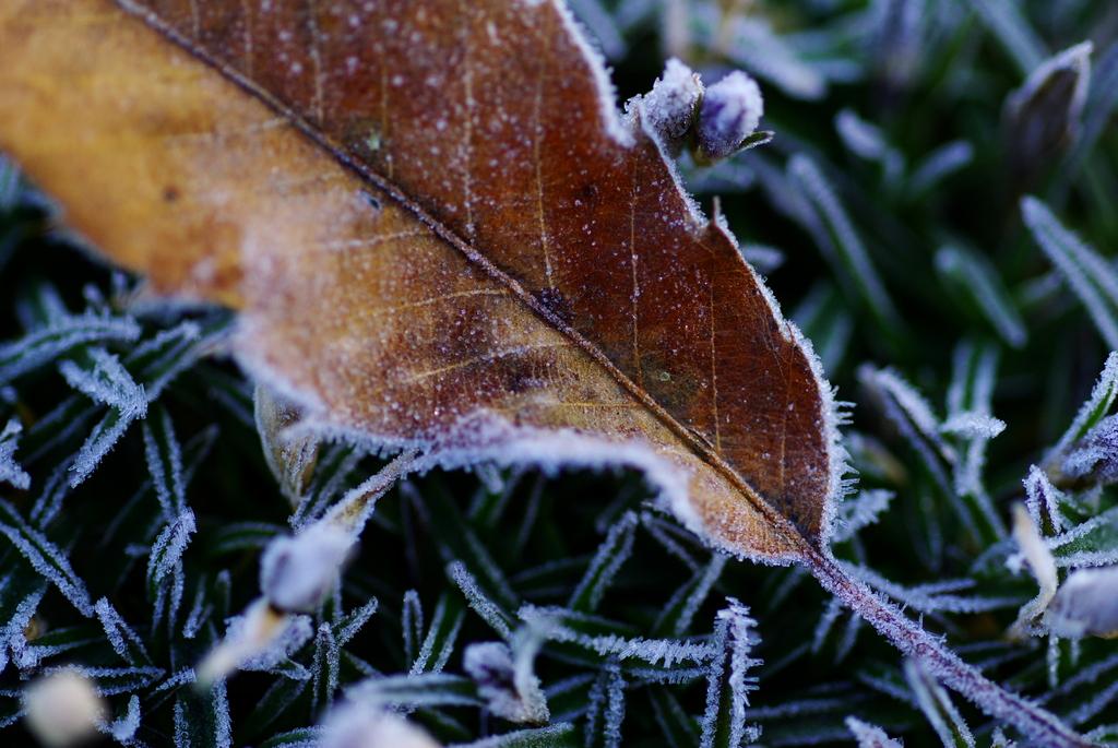 冬が始まるよ。