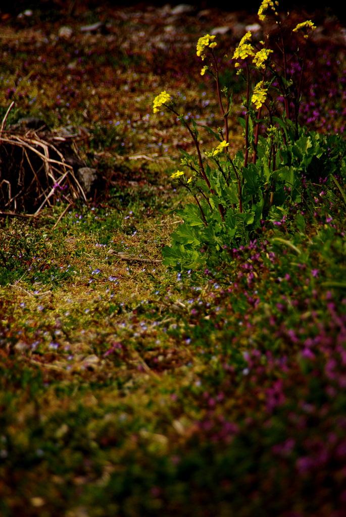 春の野道。