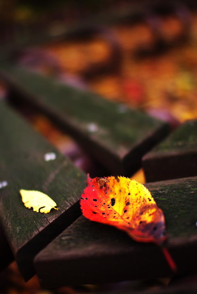 秋の破片(part2)