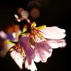 四季zakura。