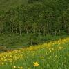 初夏の野反湖 (キスゲの咲く頃)
