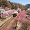 神戸駅の春