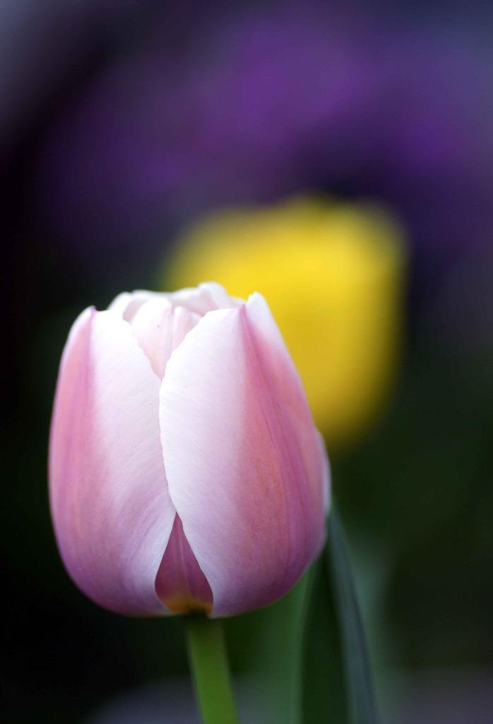 春ゐろ 4