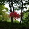 小石川後楽園_20080927_238