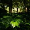 日比谷公園_皇居外苑_20081004_017