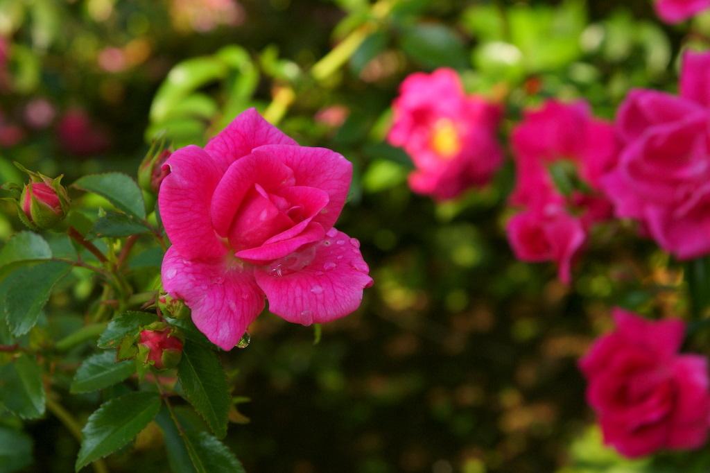 代々木公園_20081011_032