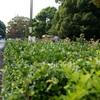 代々木公園_20081011_009