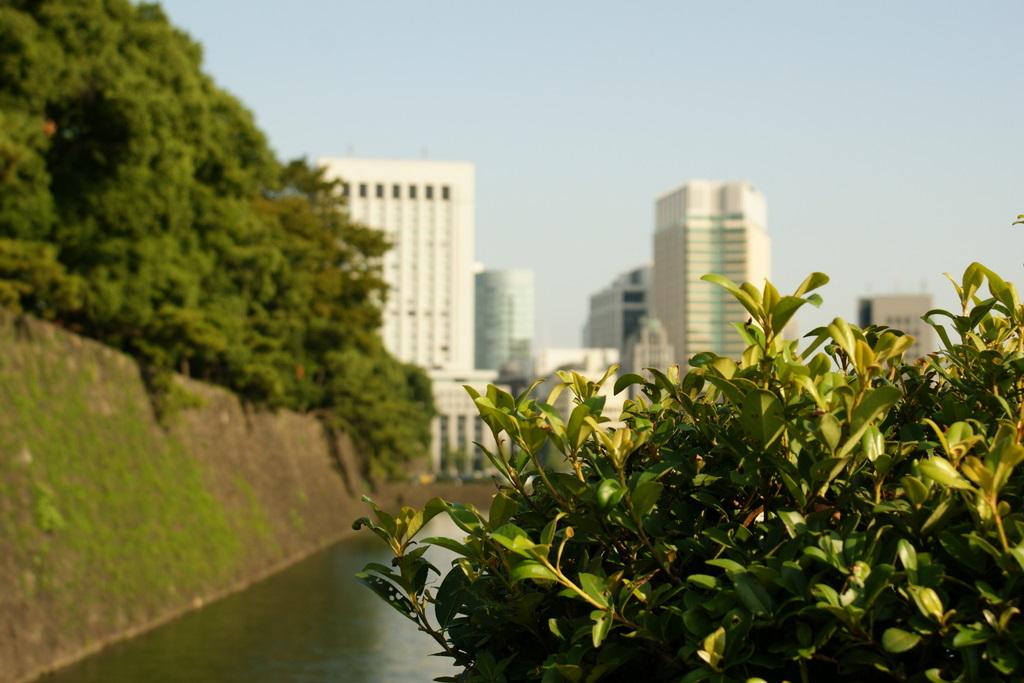 日比谷公園_皇居外苑_20081004_286