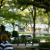 代々木公園_20081011_181