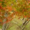 小原の紅葉