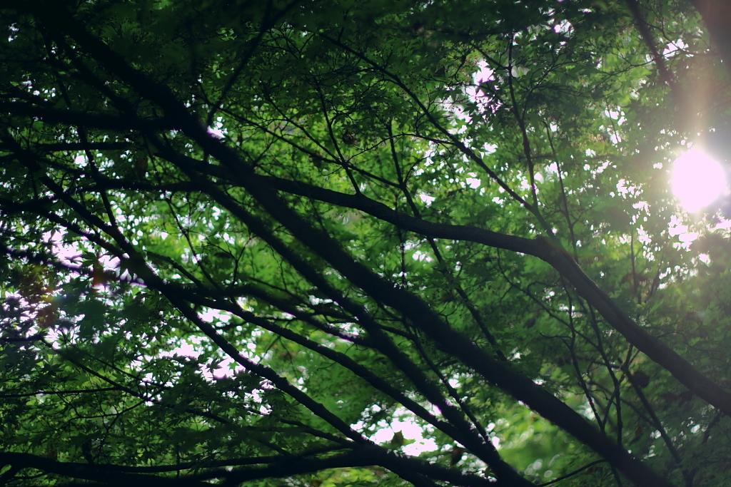 春の日差し、新緑を抜けて