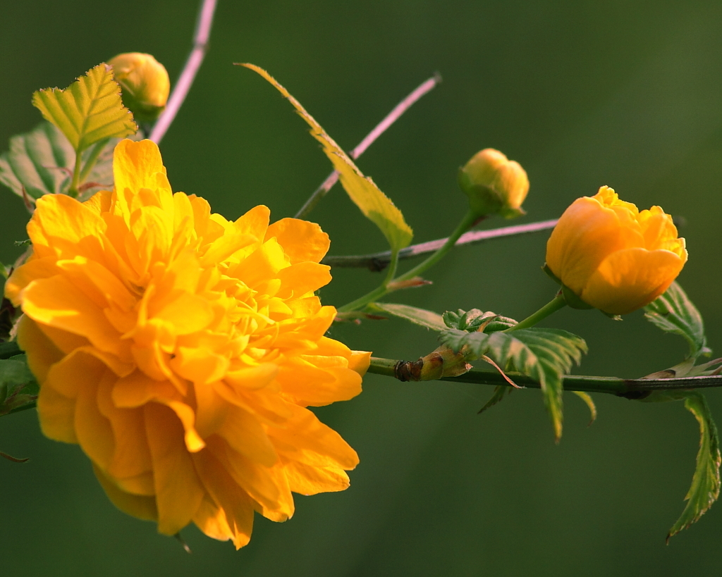 花は咲けども、実つかず