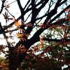 Flame-leaf