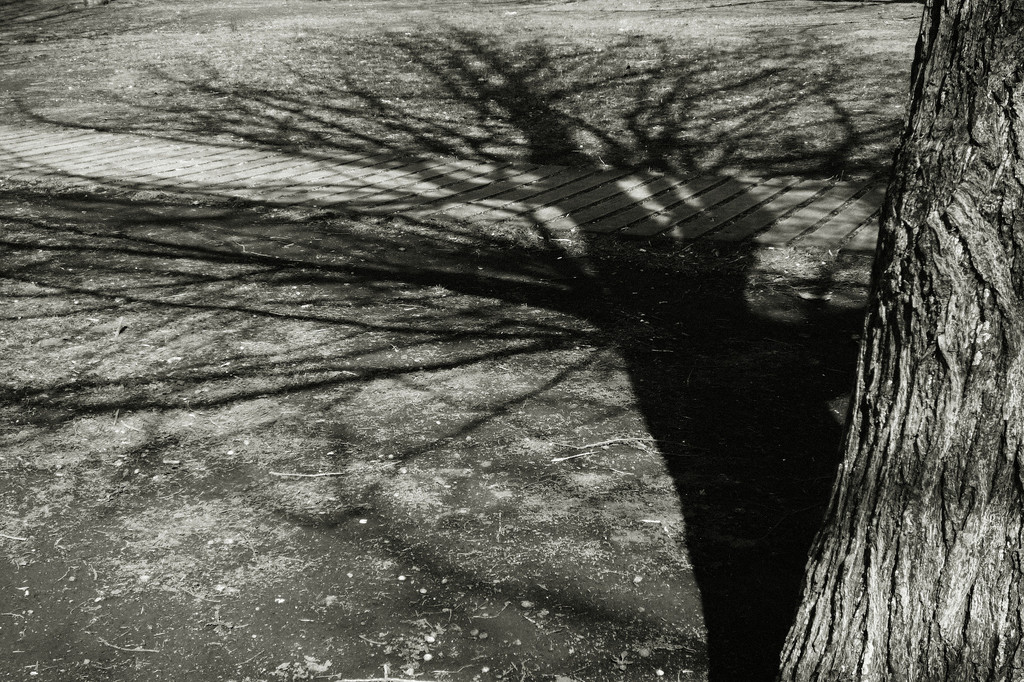 Shadow-tree