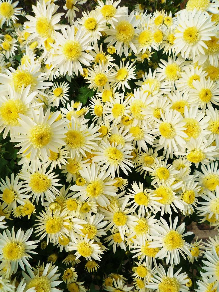 Light-flower
