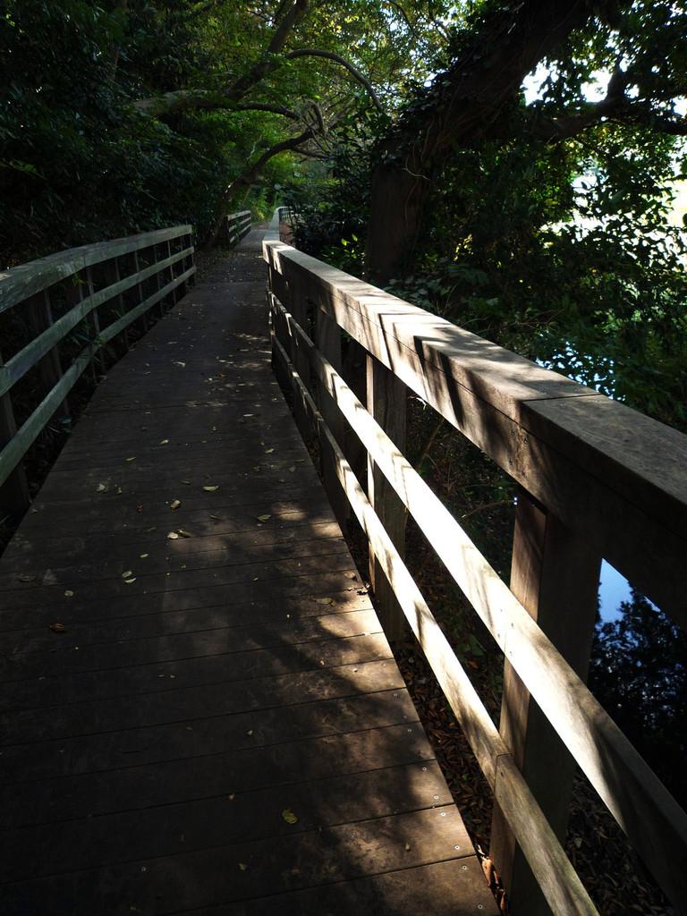 Woods-road