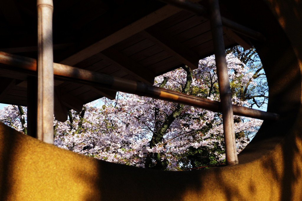 Sakura-window