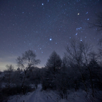 Orion Forest