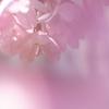 光のどけき春の日に