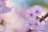 早春の優しい光の中