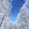白い落葉松の路